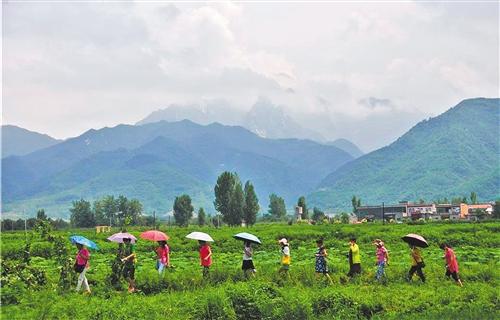 陕西持续深入修复保护秦岭生态