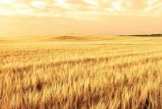 内蒙古80万农户在农业生产托管中受益