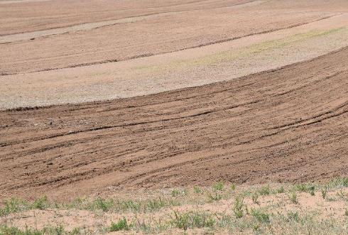 内蒙古近半面积出现干旱